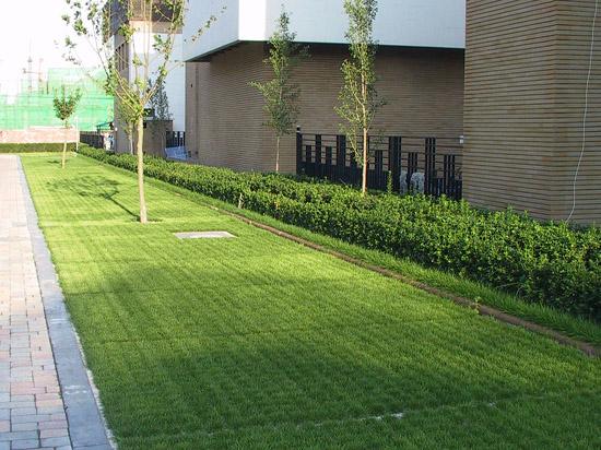 绿色停车场2